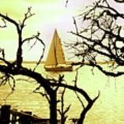 Sailboat Golden Sunset Poster