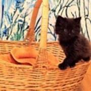 Sassy Cat Poster