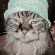 Sassy Sassy Cat Poster