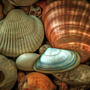 Sea Pebbles With Shells Poster