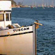 Seagull Morro Bay California Poster