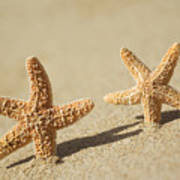 Seastars On Beach Poster