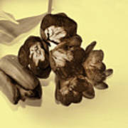 Sepia Flowers Poster