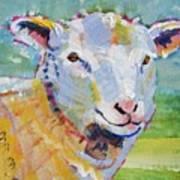 Sheep Head Poster