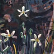 Sierra Wildflowers Poster