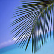 Single Palm Frond Poster