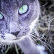 Skitty Cat Poster