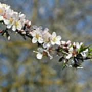 Spring Blooming. Poster