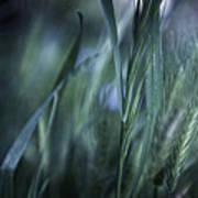 Spring Grass Emerging Poster