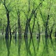 Spring Green Reflections  Poster by Lori Frisch
