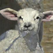 Spring Lamb Poster by John Reynolds