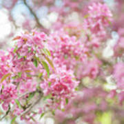 Spring Lightness Poster