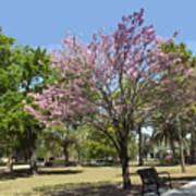 Spring Magnolia In Winter Park  Poster