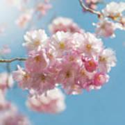 Spring Pinks Poster