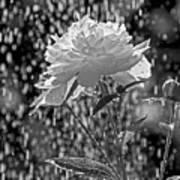 Spring Rain - 365-13 Poster