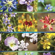 Spring Wildflowers II Poster