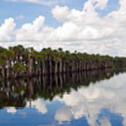 Stick Marsh In Fellsmere Florida Poster