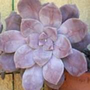 Stone Flower Poster