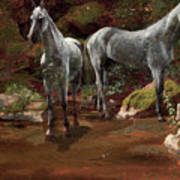 Study Of Wild Horses Poster