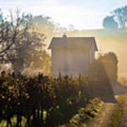 Sun Rays In Morning Fog Vineyard View Poster