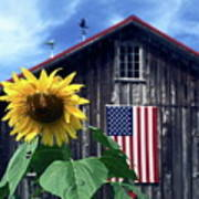 Sunflower By Barn Poster