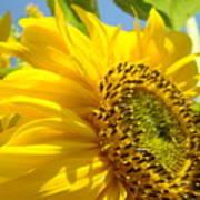 Sunflowers Art Prints Sun Flower Giclee Prints Baslee Troutman Poster