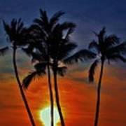 Sunlit Palms Poster