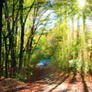 Sunny Autumn Path Poster