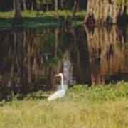 Swamp Bird Poster