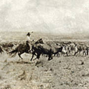 Texas: Cowboy, C1908 Poster