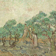 The Olive Orchard, 1889 Poster
