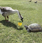 The Turtle And The Goose Poster