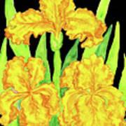 Three Yellow Irises, Painting Poster