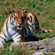 Tiger II Poster