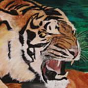 Tiger Paw Poster by Shahid Muqaddim