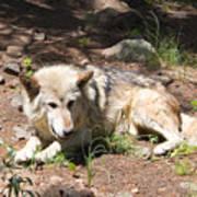 Tour Of Rocky Mountain Wildlife Foundation Poster
