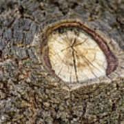 Tree Bark 2 Poster