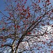 Tree In Benalmadena Poster