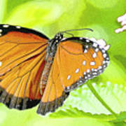 Tropical Queen Butterfly Framing Image Poster