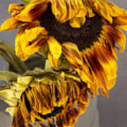 Two Sunflowers Tournesols Poster