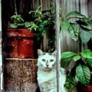 Village Cat Poster