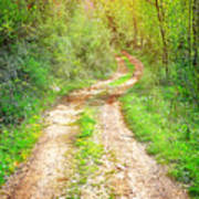 Walkway In Secluded Deciduous Forest Poster