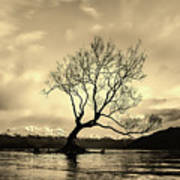 Wanaka Tree - New Zealand Poster