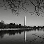 Washington Memorial Framed By Cherry Trees In The Winter Poster