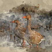 Watercolour Painting Of Beautiful Greylag Goose Anser Anser In W Poster