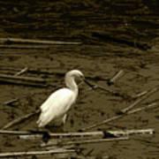 White Snowy Egret Poster