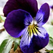 Wild Ground Flowers Poster