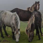 Wild Ponies On The Preseli Mountains Pembrokeshire Poster