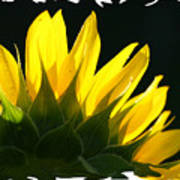 Wild Sunflower Poster
