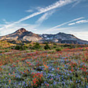 Wildflowers At Mt. St. Helen's Poster